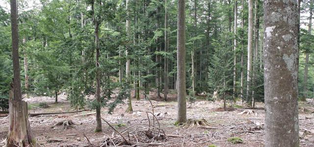 Nationalpark Bayerischer Wald – Bilder